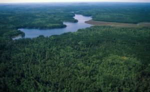 miškas Lietuvoje