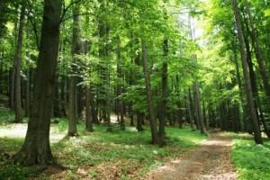 Apie mišką