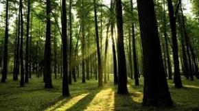 Lietuviškas miškas