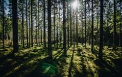 Miškų supirkimo paslauga